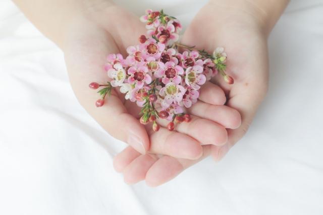 ワックスフラワーの花言葉<Wax flower>気まぐれ、繊細、可愛らしさ、まだ気づかれない長所