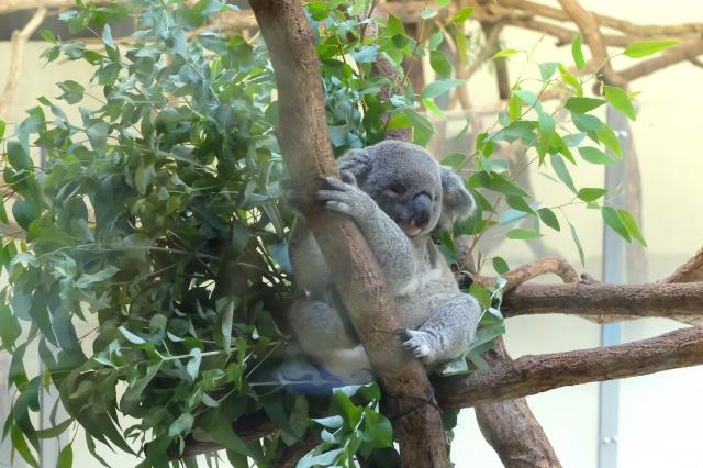 ユーカリの花言葉<Eucalyptus> 思い出、記憶、再生、慰め、追憶