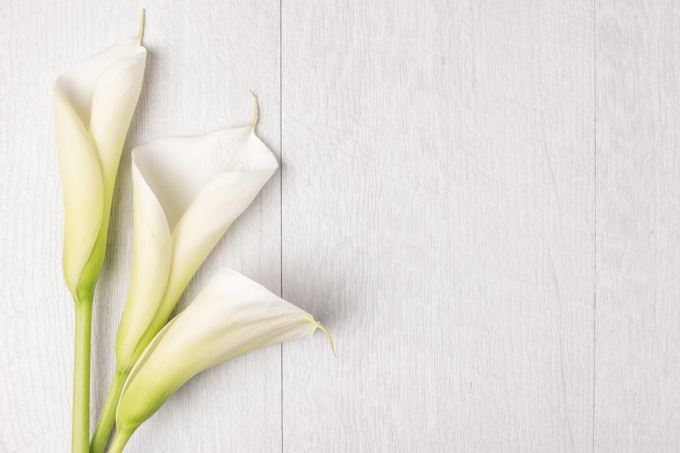 カラーの花言葉<Calla lily> 凛とした美しさ