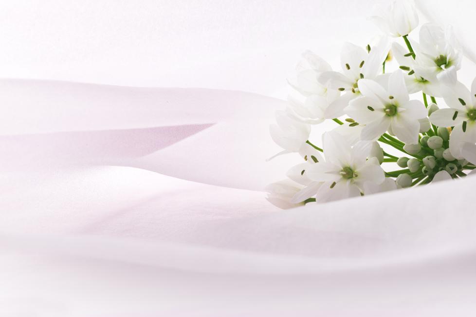 アリウム・コワニーの花言葉<Allium Cowanii> 無限の悲しみ