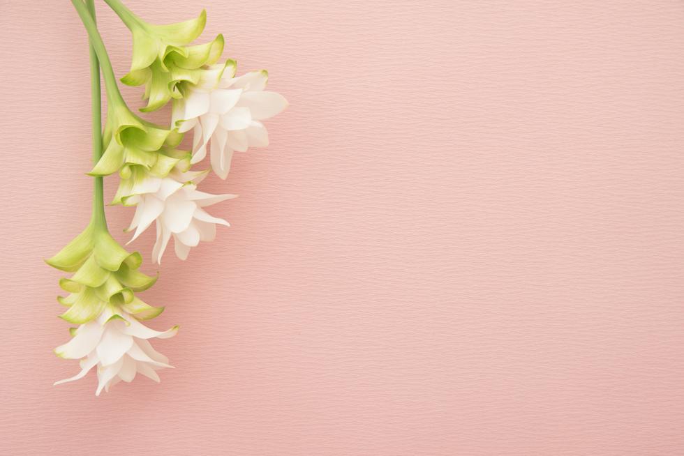 クルクマの花言葉<Curcuma> 因縁、忍耐