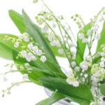 すずらんの花言葉<Lily of valley> 純粋、謙遜、幸せが訪れる