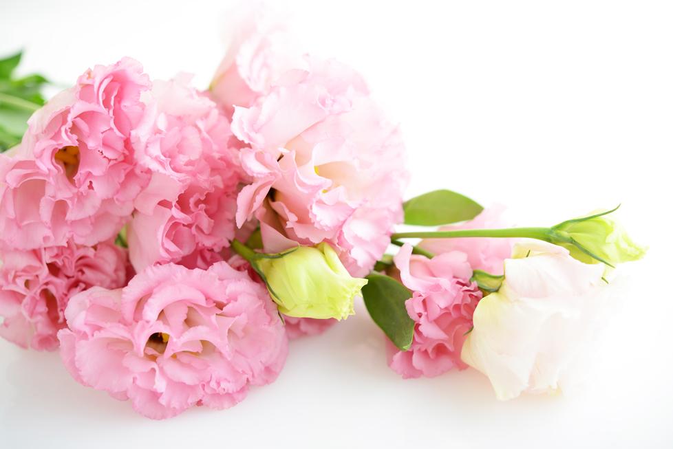 トルコキキョウの花言葉<Eustoma> 優美、希望、感謝