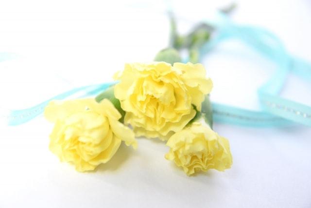 黄色のカーネーション