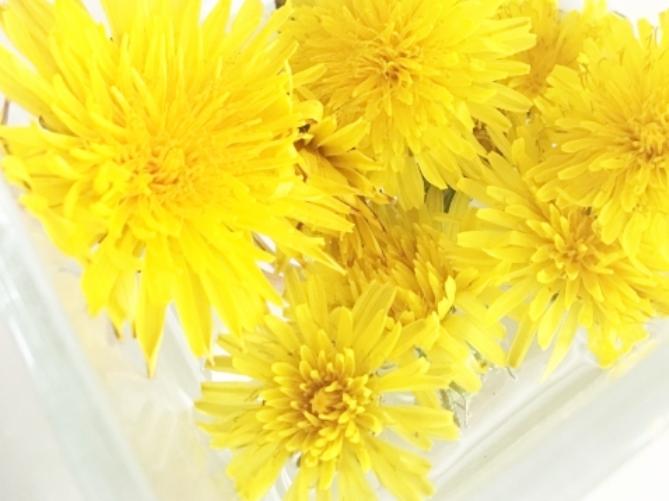 たんぽぽの花言葉<Dandelion> 真心の愛 愛の信託 神のお告げ