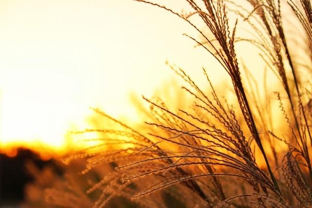 秋の七草とは 花の種類や写真、覚え方、由来となった万葉集の短歌など