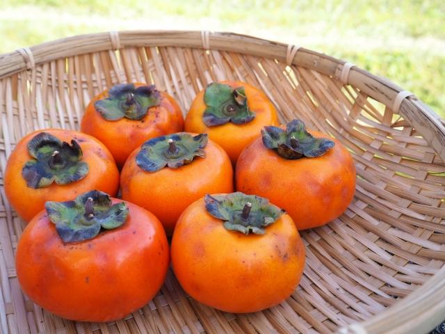 柿の花言葉 自然美、優しさ、恩恵、優美、恵み、私を永遠に眠らせて