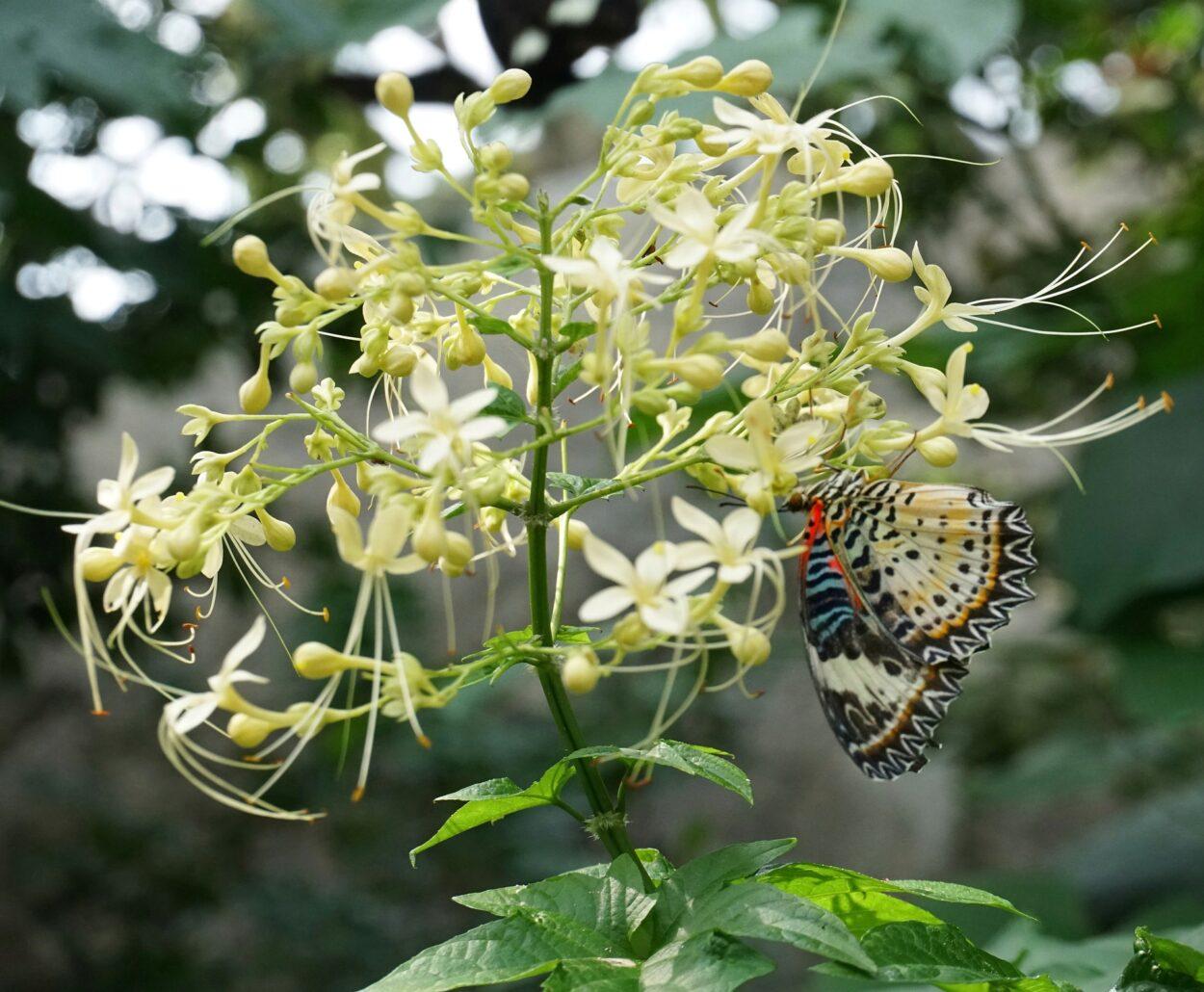 可愛い名前なのに無名なクラリンドウの花言葉や花名の由来、誕生花