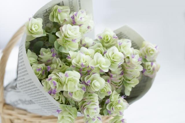 ハーブで有名!オレガノの花言葉や花の特徴、花名の由来、誕生花を紹介